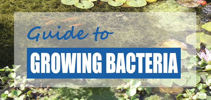 how to grow good DIY pond bacteria naturally