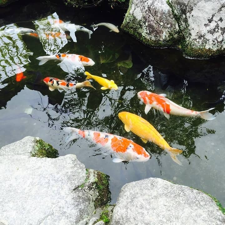 Unique Fish Names for Koi & Goldfish 2019 (From Myth