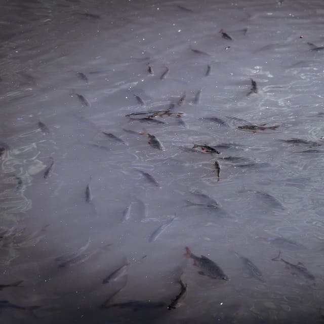 harmful runoff into pond from heavy rain