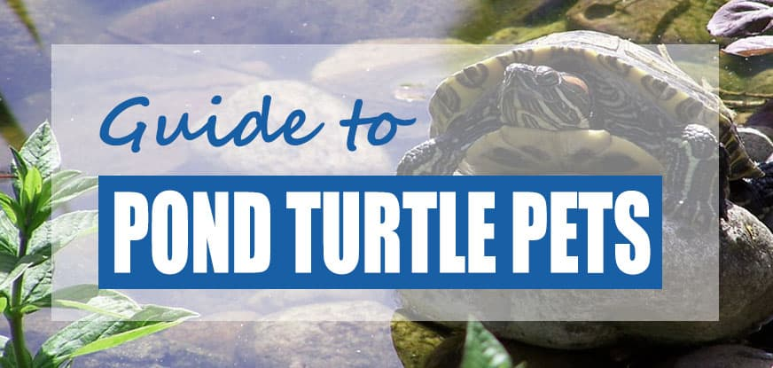 Types of Freshwater Pond Turtles