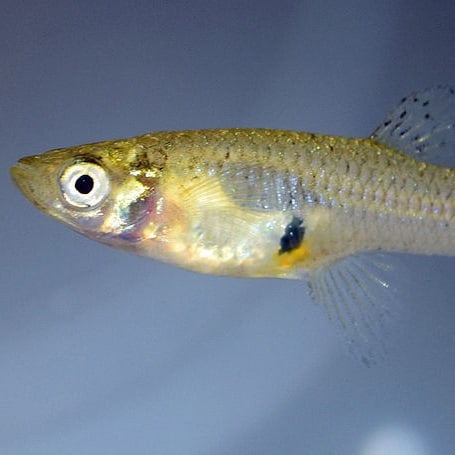 List of Small Pond Fish Species (Best Small Pond Fish