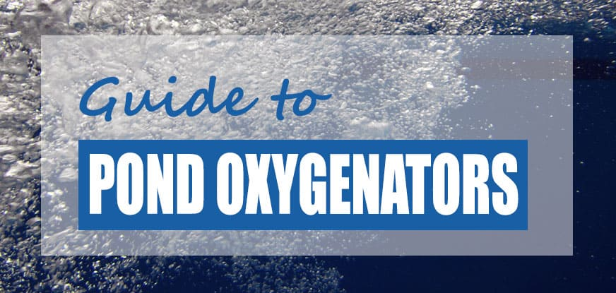 Best Pond Oxygenator Methods