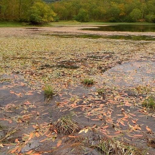 Too many lake weeds contributing to bottom muck