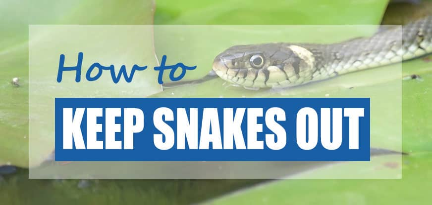 How To Get Rid Of Water Snakes Best