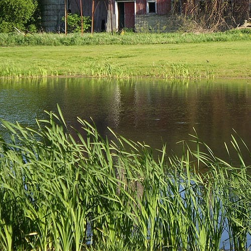 a pond without koi clay experiencing runoff from a nearby lawn