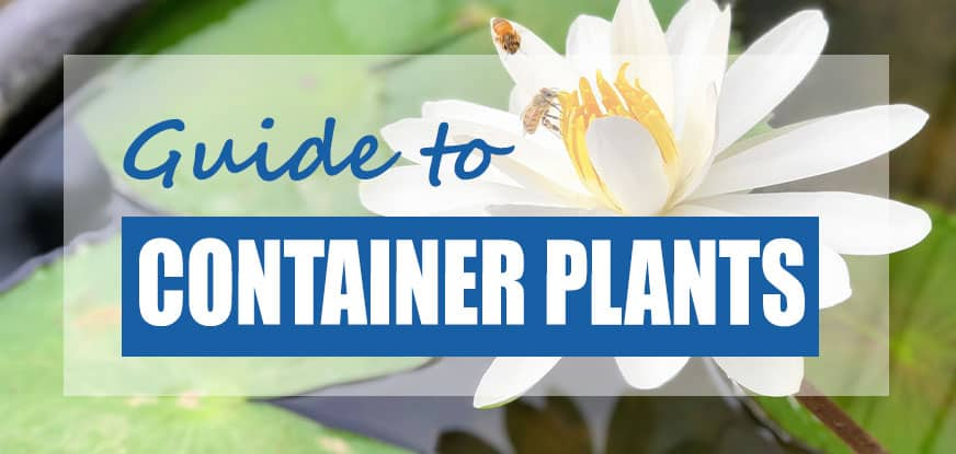 10 Best Plants For Container Ponds Bowls Tubs Patios Updated