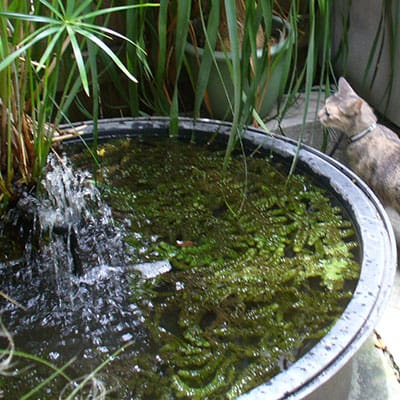 An aerator providing oxygen in a container patio pond