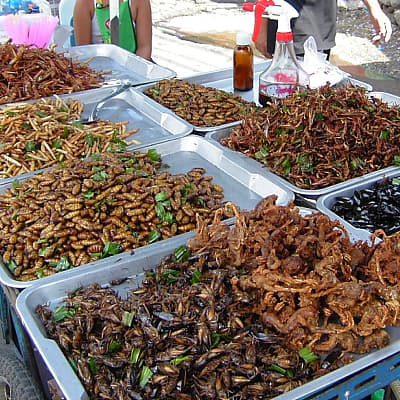giant water bug food market