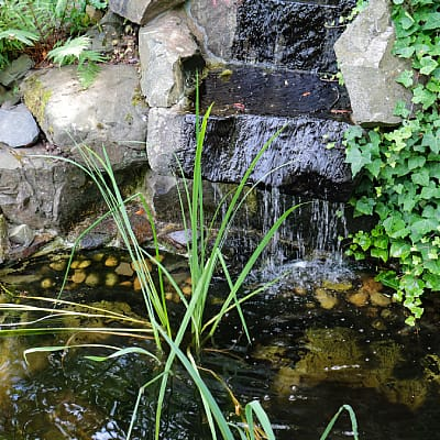 best plants for waterfall planting