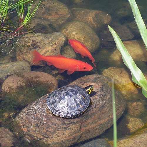 benefits of aquatic worms