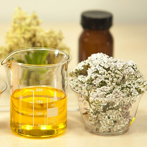 uses and benefits of meadowsweet