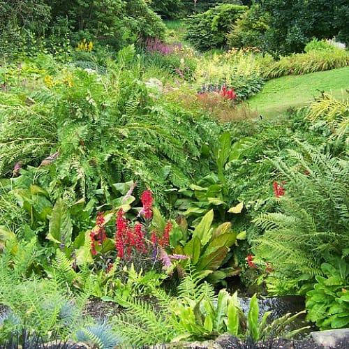 how to create a bog garden