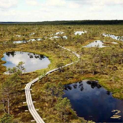 The Great Kemeri Bog in Latvia