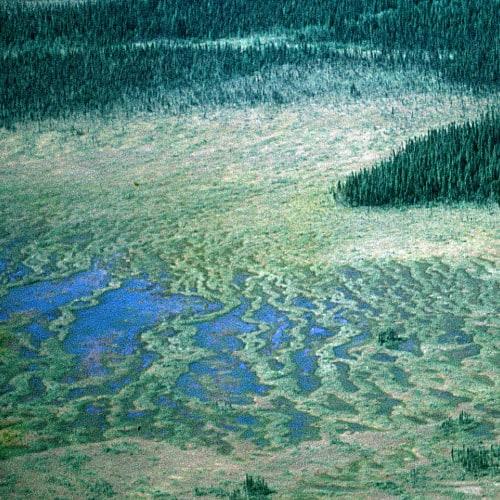a string bog in Goose Bay, Canada