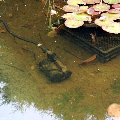 A pump in a garden pond