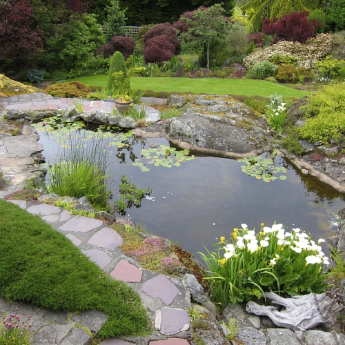 A small pond in a garden