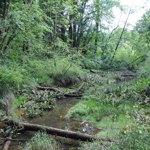 Riparian forest in Washington, USA