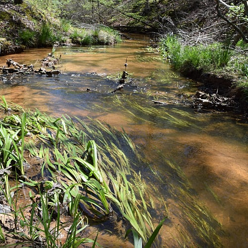 Eelgrass underwater