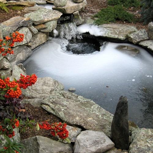 A frozen koi pond