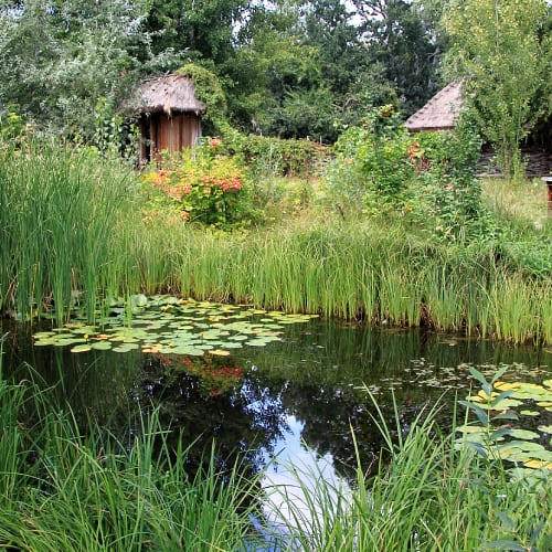 A wildlife pond with plants surrounding it