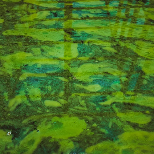 Stagnant water with algae
