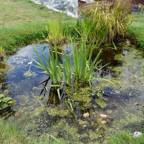 A shallow pond