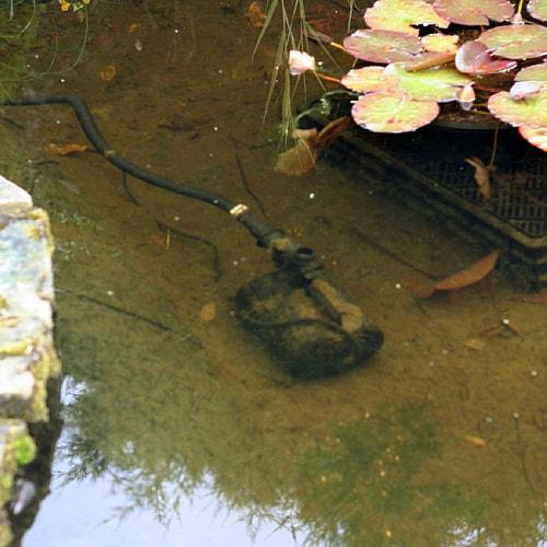 A pond pump at the bottom of a pond