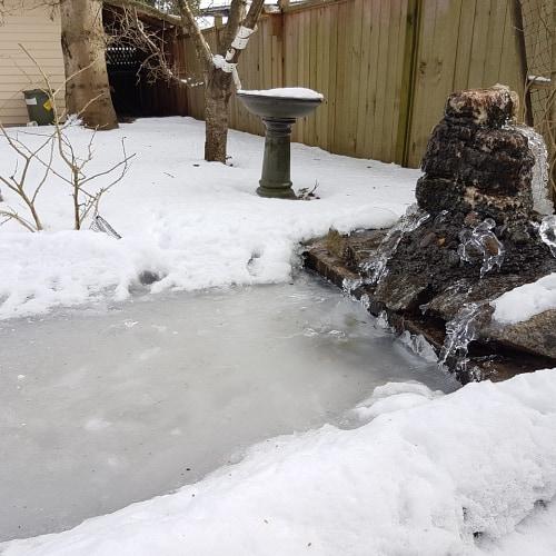 A frozen pond in a garden