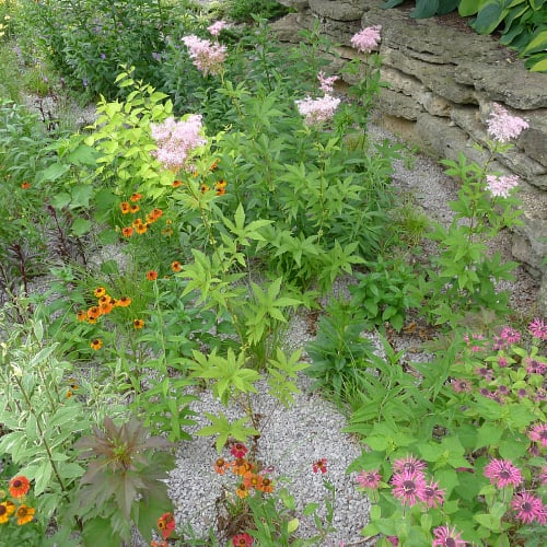 A rain garden with a variety of plants