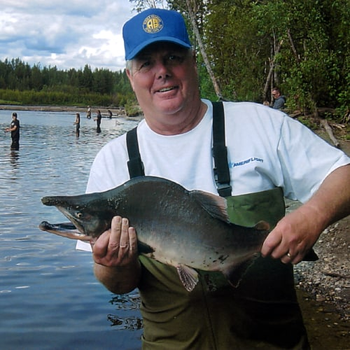 A male pink salmon being held by a fisherman